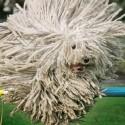 dog-crazyhair